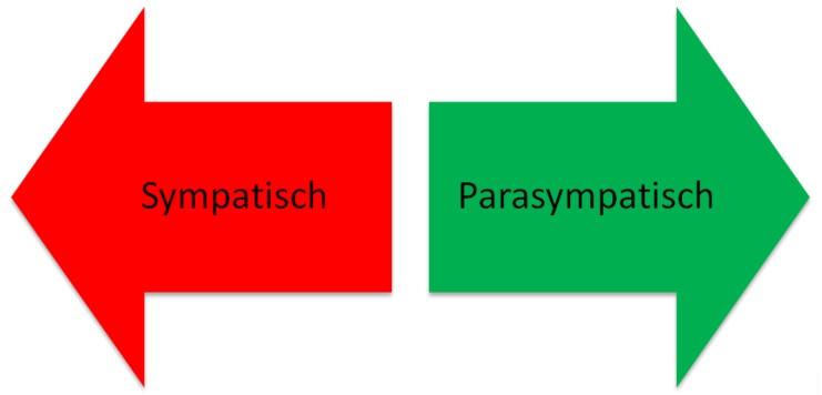Pijlen Sympatisch, Parasympatisch