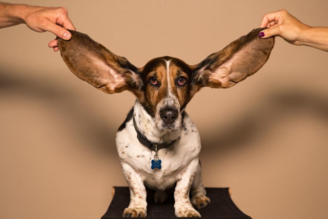 NLP & Predicaten: zorgen dat je woorden gehoord worden!