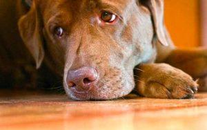 page image de eerste verdieping supercoach saddog