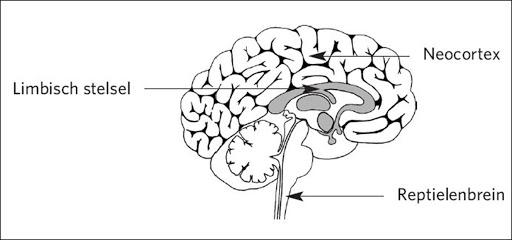 NLP en de werking van het brein