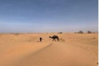 Iedere woestijn heeft zijn wel
